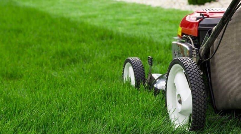 cutting new turf