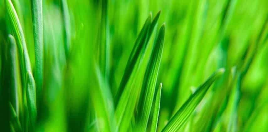 how tall should I cut grass