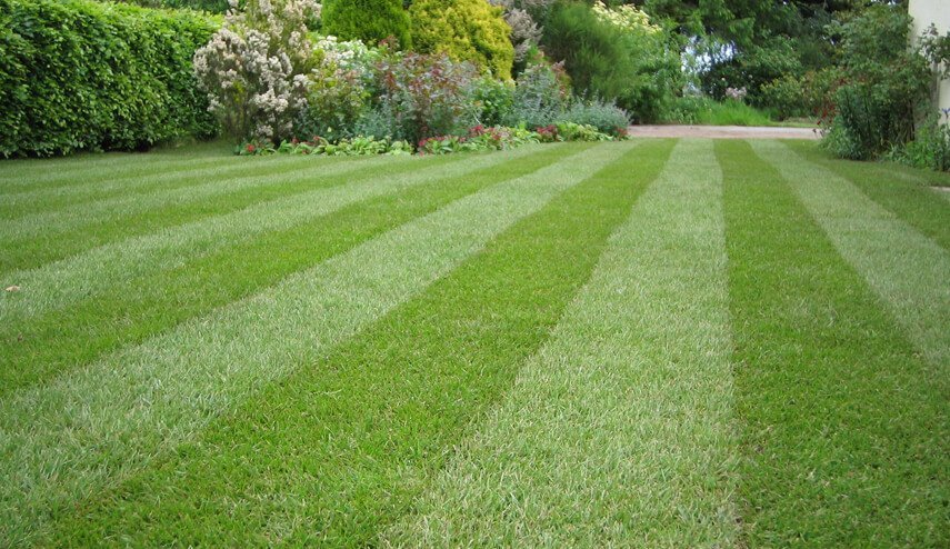 how to create a striped lawn