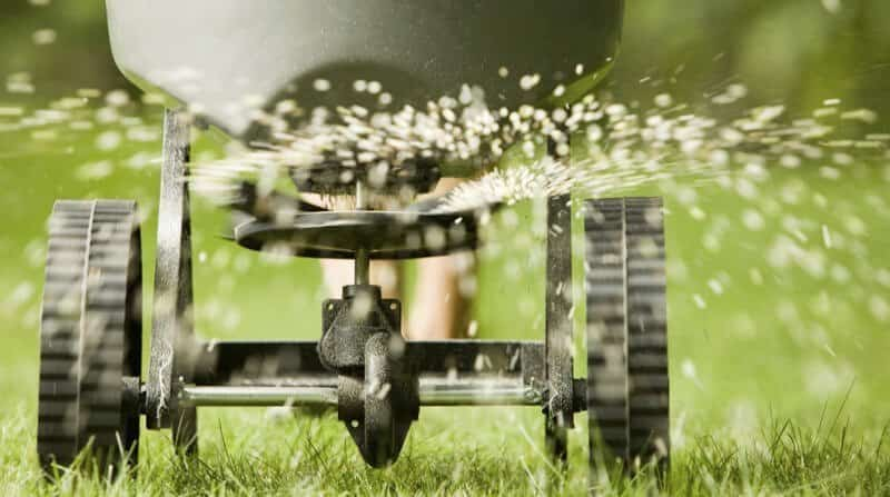 when to feed your lawn