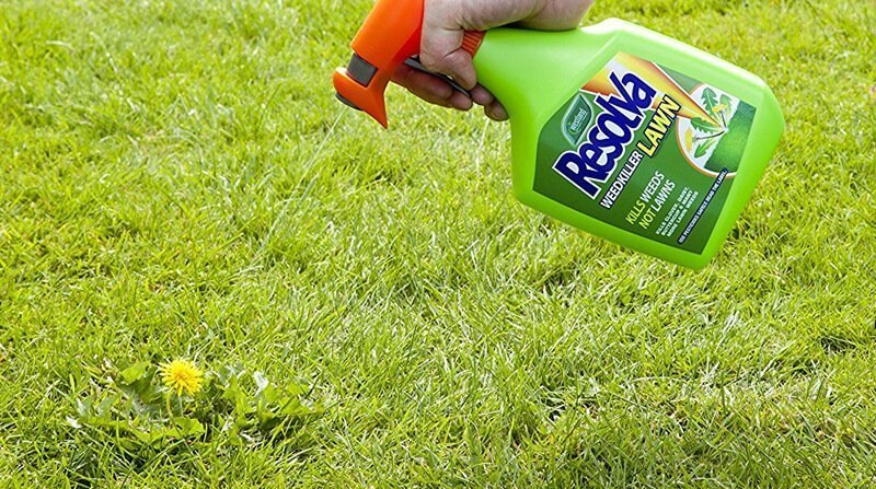 kill dndelions with lawn weed killer
