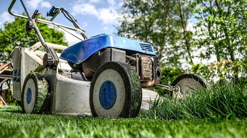 mow the lawn regularly to prevent dandelions growing