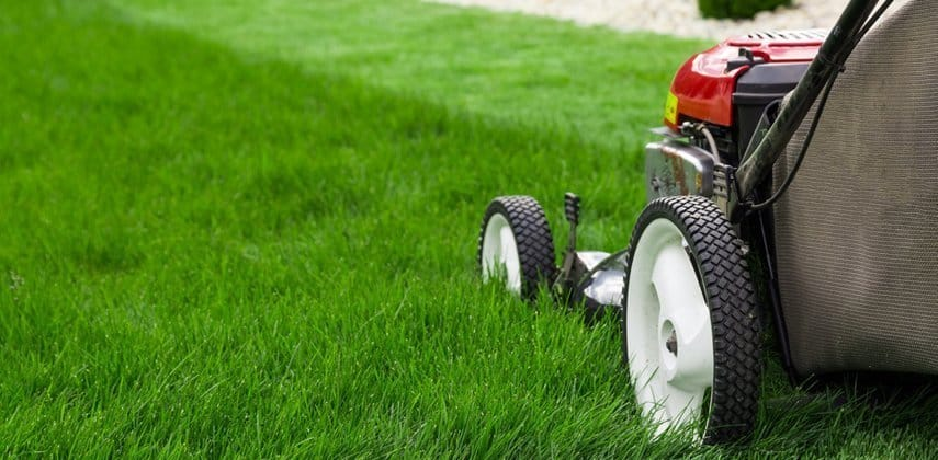preventing lawn moss