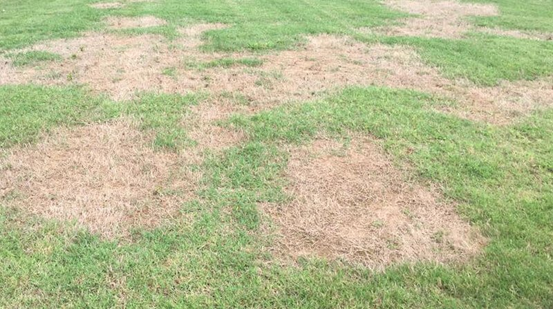 Dirt Patches In Lawn