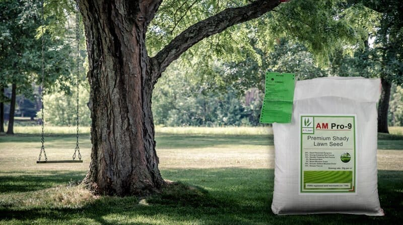 best grass seed for shady lawns