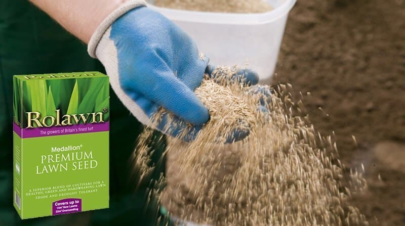 best general purpose grass seed