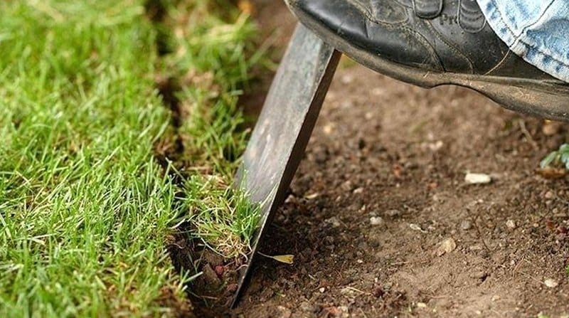 edging a lawn in spring