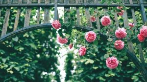 rose sport