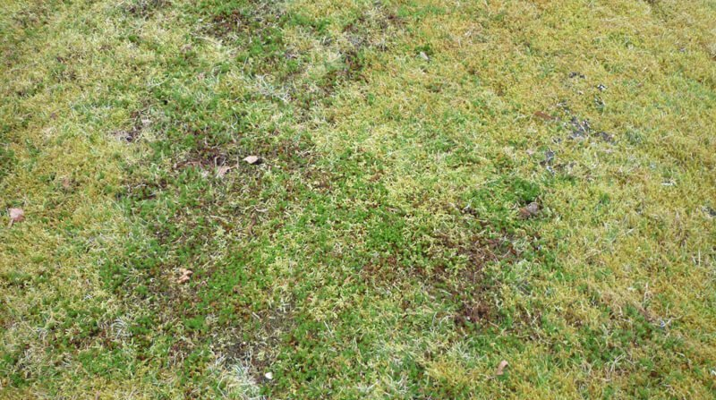 the affects of excessive lawn thatch