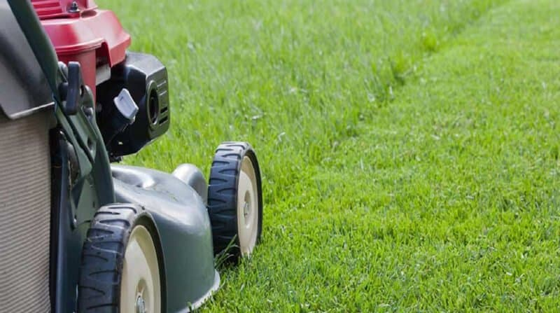 when to cut grass