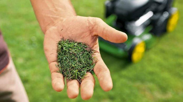 mulching grass clippings