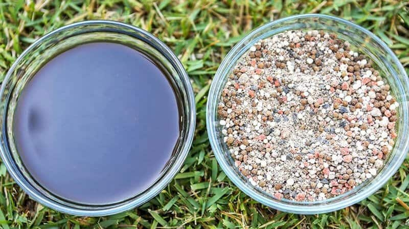 liquid lawn feed vs granular lawn feed