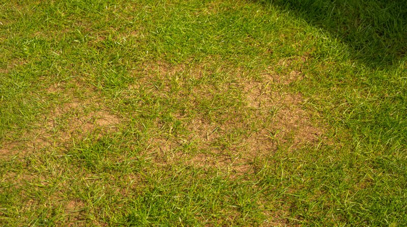 bare patched on lawn